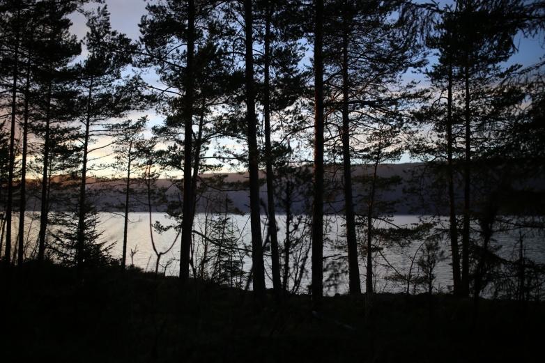 Skog ved Randsfjorden, Oppland. (Foto: Mari Valen Høihjelle)